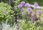 Heilung aus dem Klostergarten: Von Kräuterfrauen und Druiden